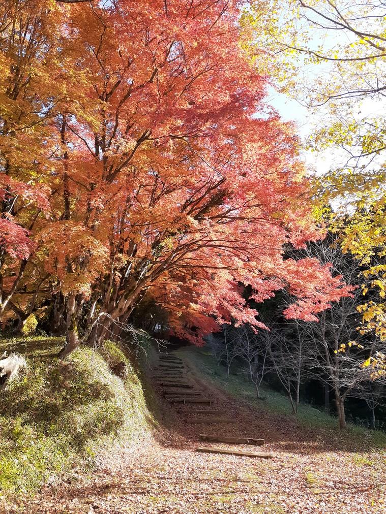 f:id:takamaru1136:20201115104933j:plain