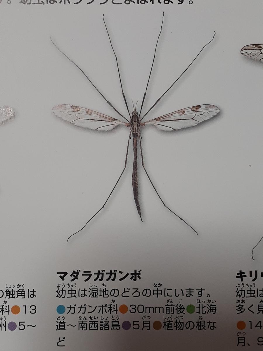 f:id:takamaru1136:20210406125521j:plain