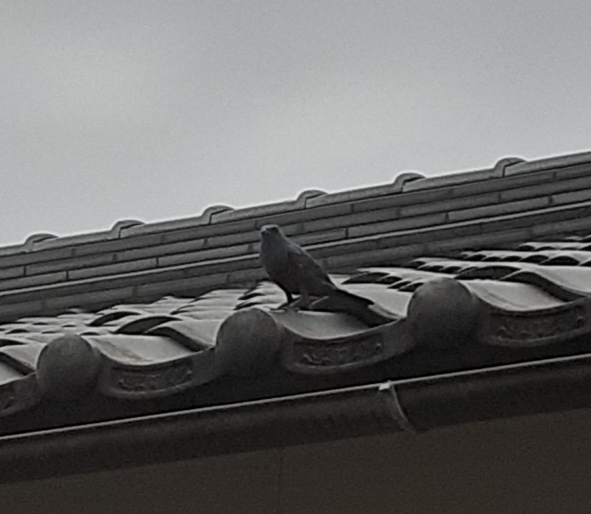 f:id:takamaru1136:20210524104059j:plain