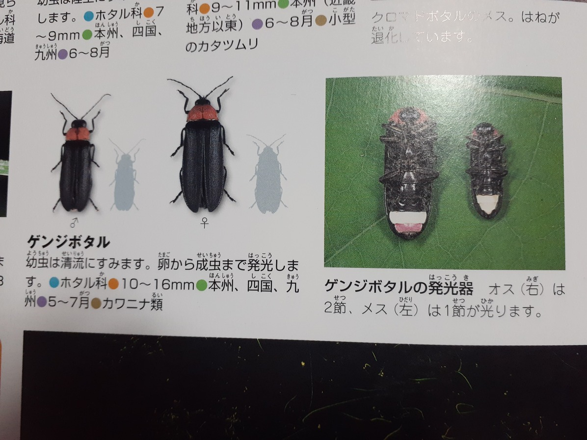 f:id:takamaru1136:20210530150633j:plain