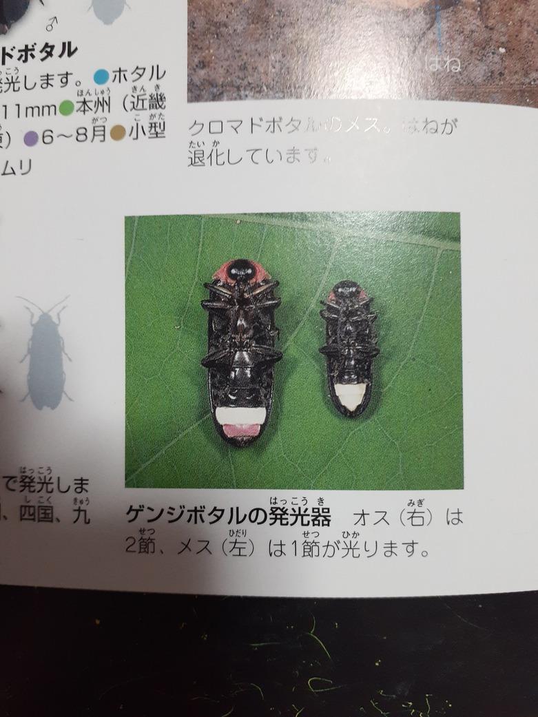 f:id:takamaru1136:20210530150717j:plain