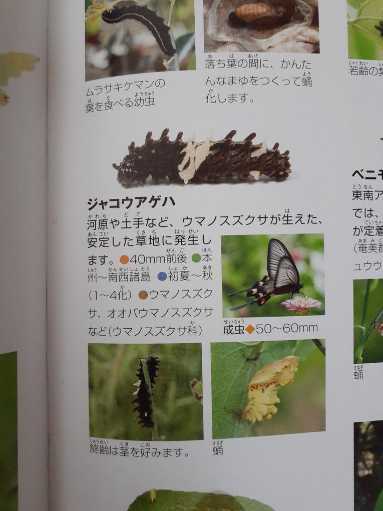 f:id:takamaru1136:20210611103610j:plain