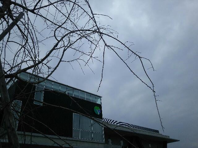 f:id:takamatsu-999y:20170314073017j:image