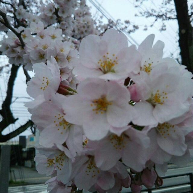 f:id:takamatsu-999y:20170408073455j:image