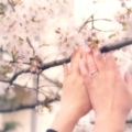 [桜ウエディング][京都][指輪]