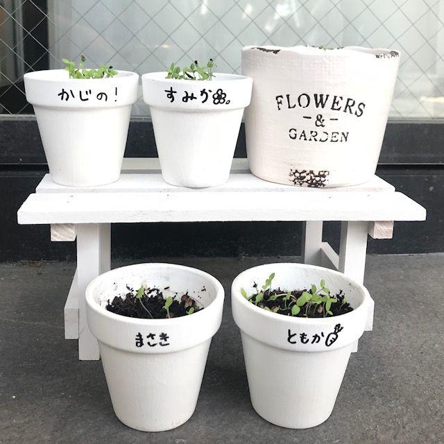 [京都 花][植物][花]