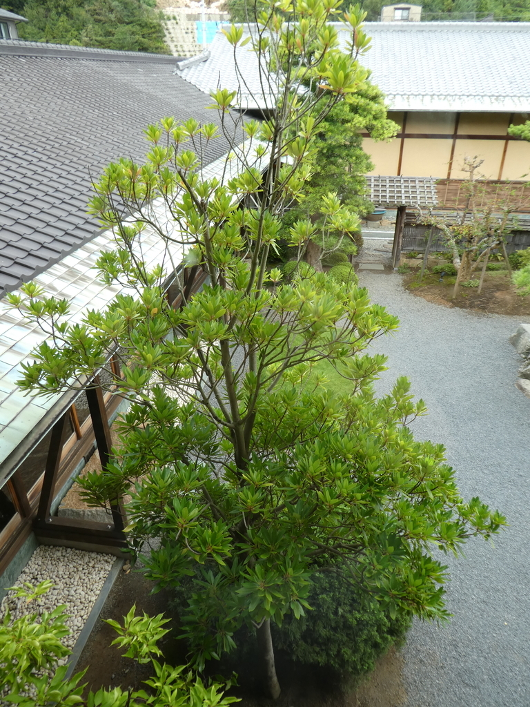 f:id:takamatsugohan:20181006010844j:plain