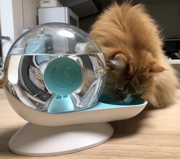 猫 自動給水器 水飲み器