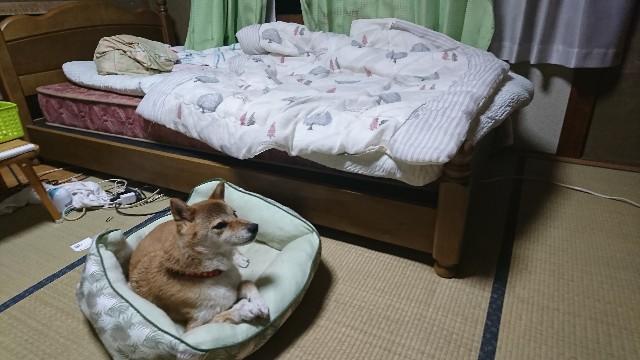 f:id:takanisi:20180903213343j:image