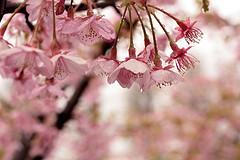 [f:id:takanoha:20110331093810j:image]