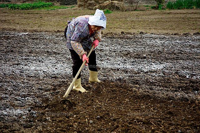 認知症予防に農業