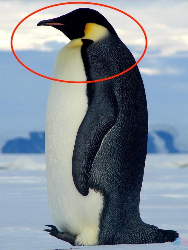 皇帝ペンギンサイン