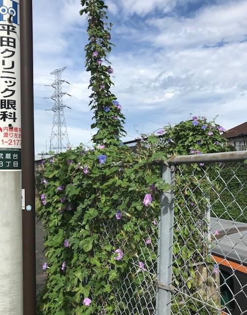 f:id:takase22:20180910085111j:image:w280:left