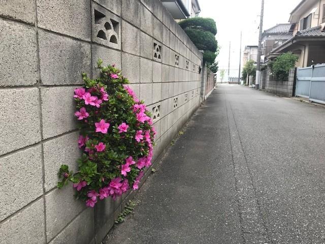 f:id:takase22:20190607093604j:plain