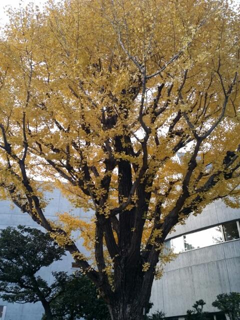 f:id:takasemariko:20171127013332j:plain