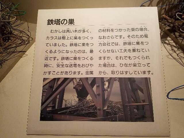f:id:takasemariko:20191125003740j:image