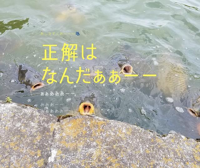 f:id:takasemariko:20200709181316j:image