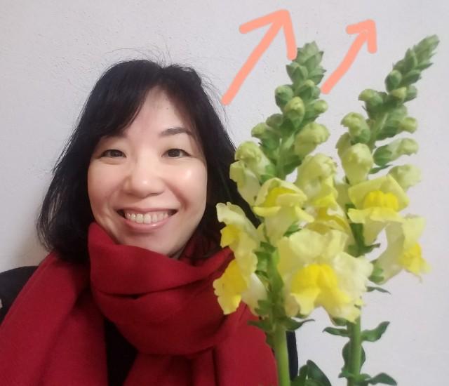 f:id:takasemariko:20210110133854j:image