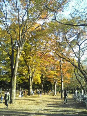 f:id:takashi1982:20071122145347j:image