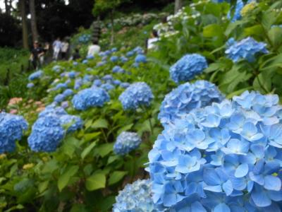 f:id:takashi1982:20150602155859j:image