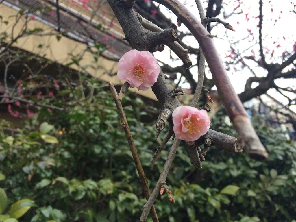 f:id:takashimasutamu:20151227180731j:image