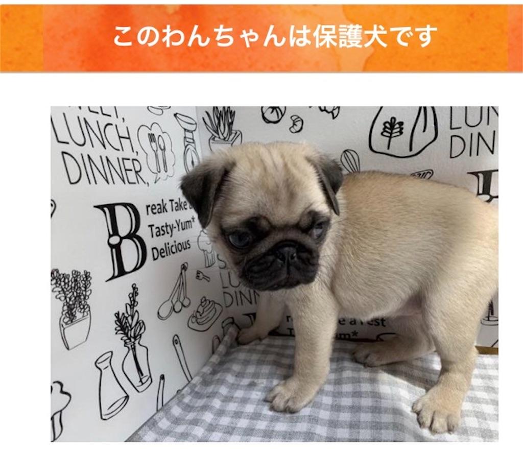 保護 犬 ブログ