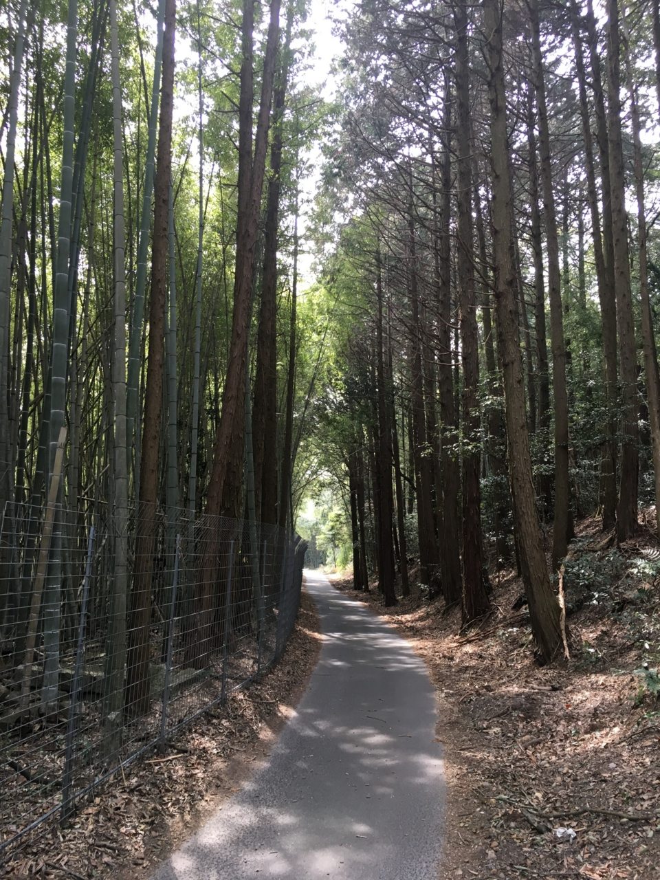 f:id:takatakamanbou:20170320215654j:plain