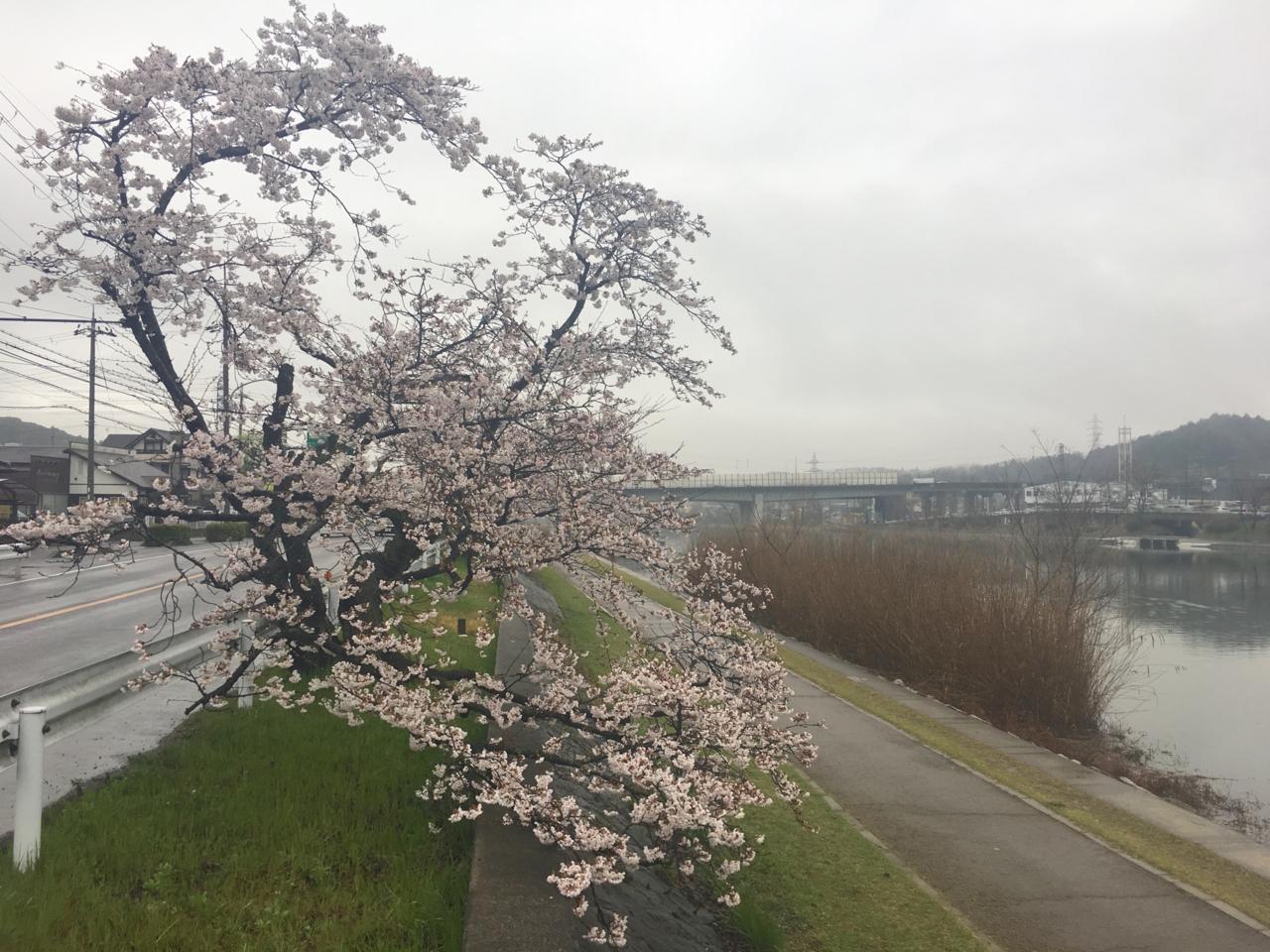 f:id:takatakamanbou:20170408224540j:plain