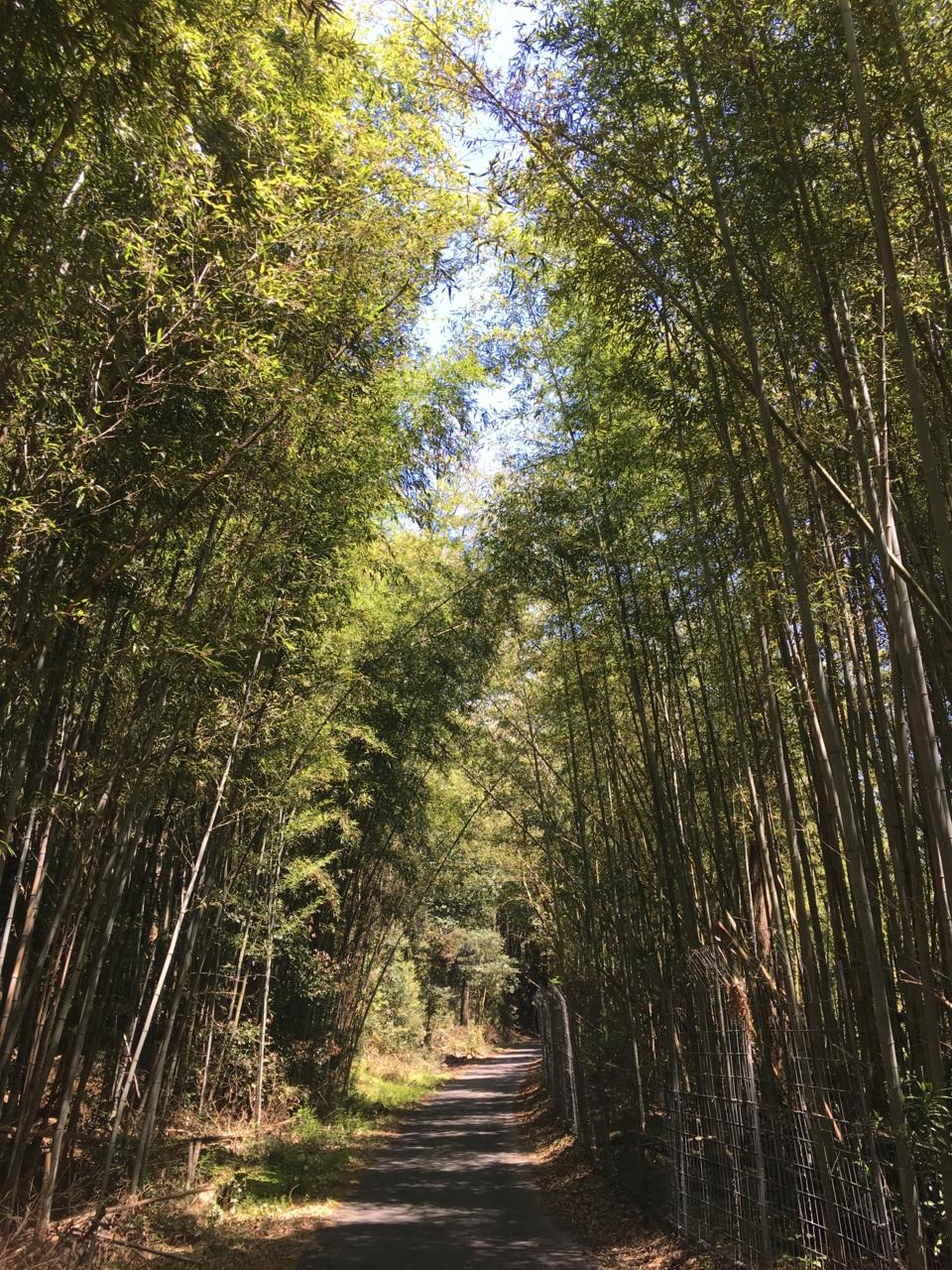 f:id:takatakamanbou:20170423230927j:plain
