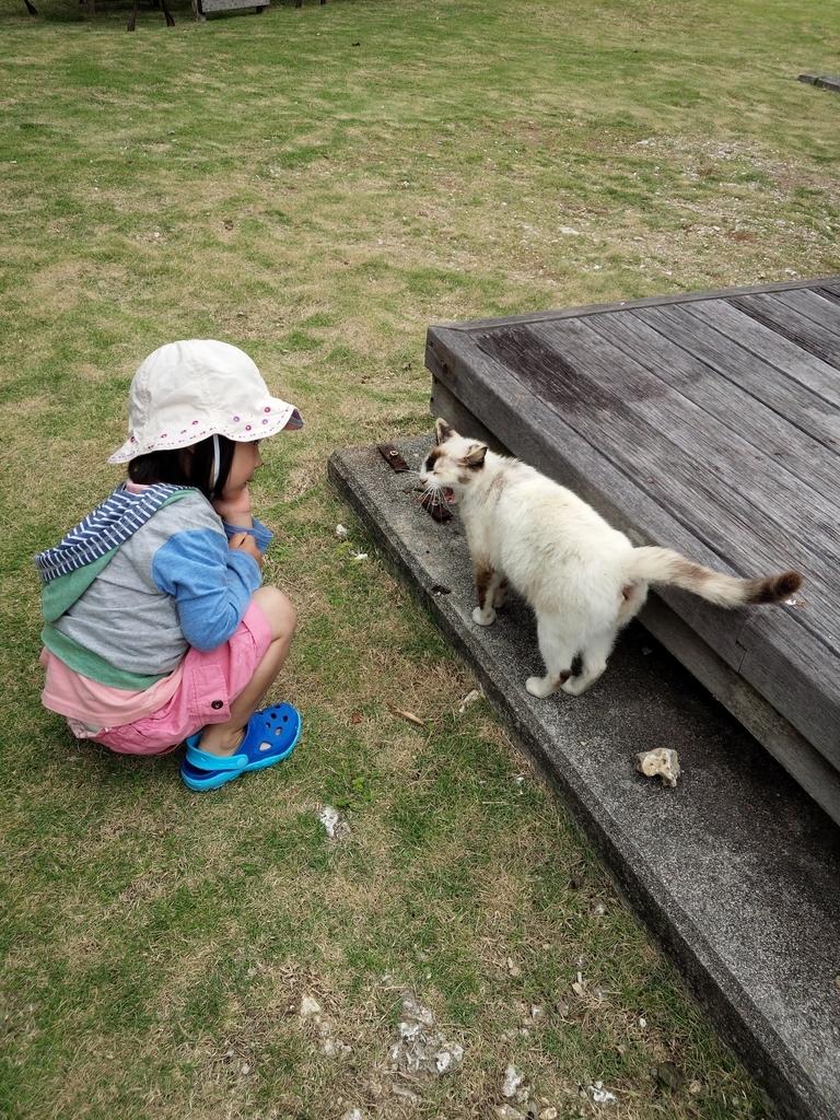 久高島の猫とのんばり過ごす