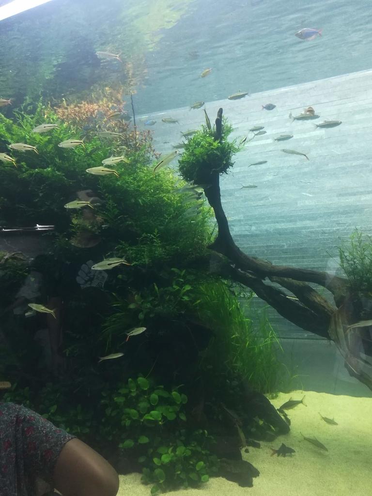 すみだ水族館は生き物がいっぱい!