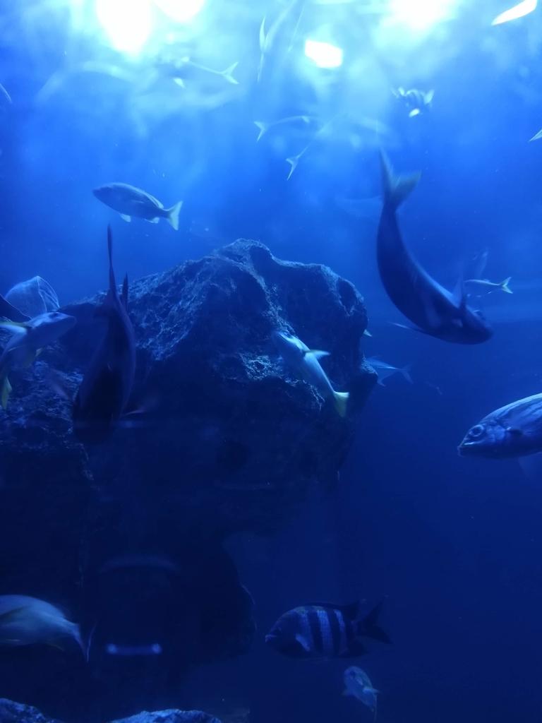 東京大水槽は幻想的な光景です