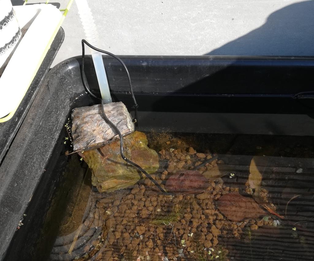 ソーラーポンプで水を循環させています