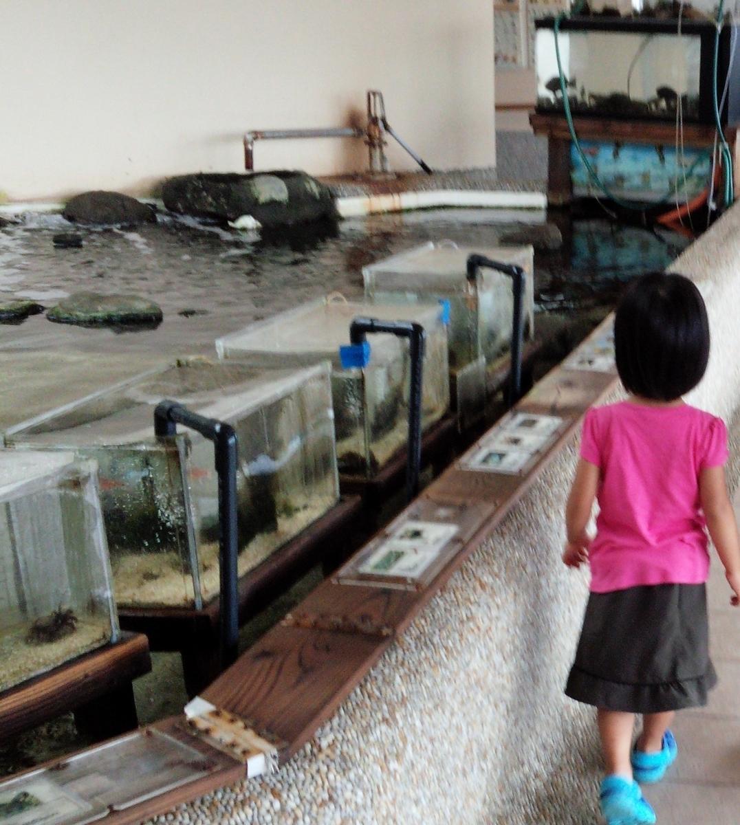 """""""渚の駅""""たてやまには小さい水族館がありますよ!"""
