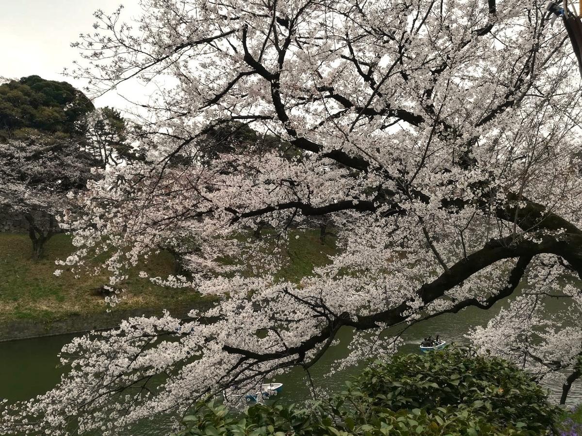 千鳥ヶ淵の桜はとってもキレイ!