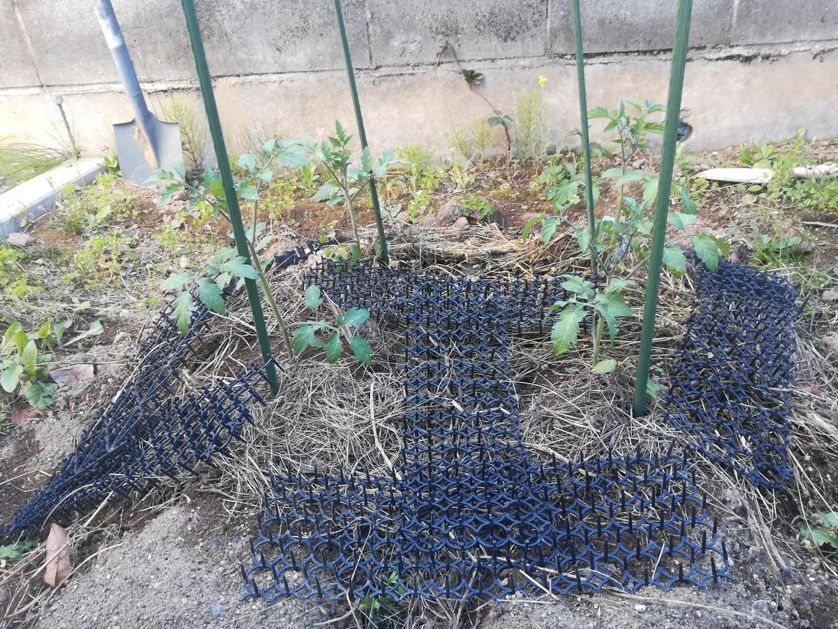 今年はミニトマトと中玉トマトを2つづつ育てることにしました!
