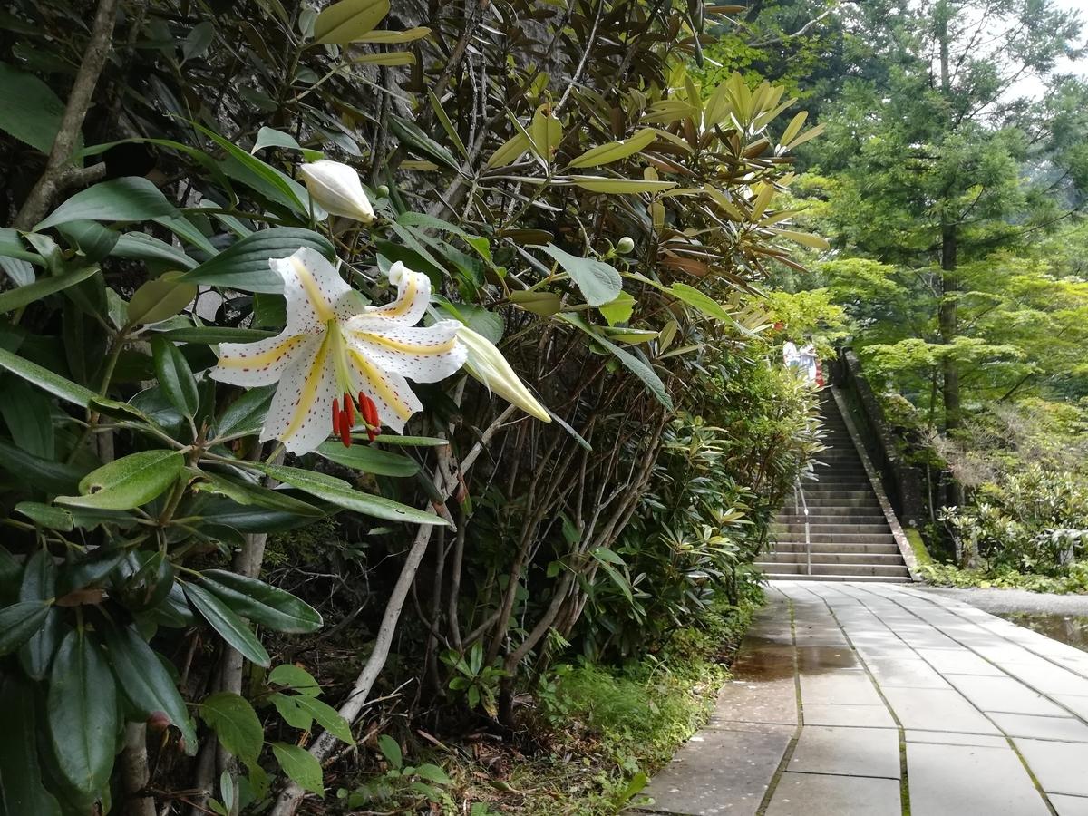榛名神社の参道には大きなヤマユリが咲いていました