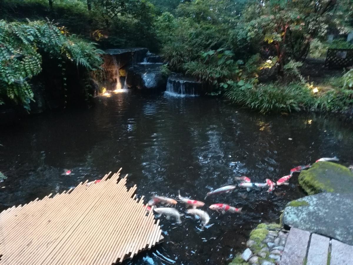 中庭には錦鯉が泳いでいる池もあります