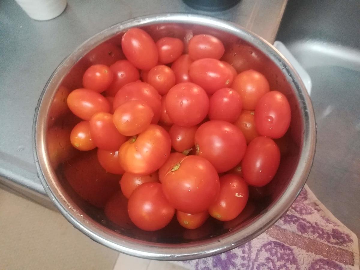 ミニトマトと中玉トマトがこんなにたくさん採れました!