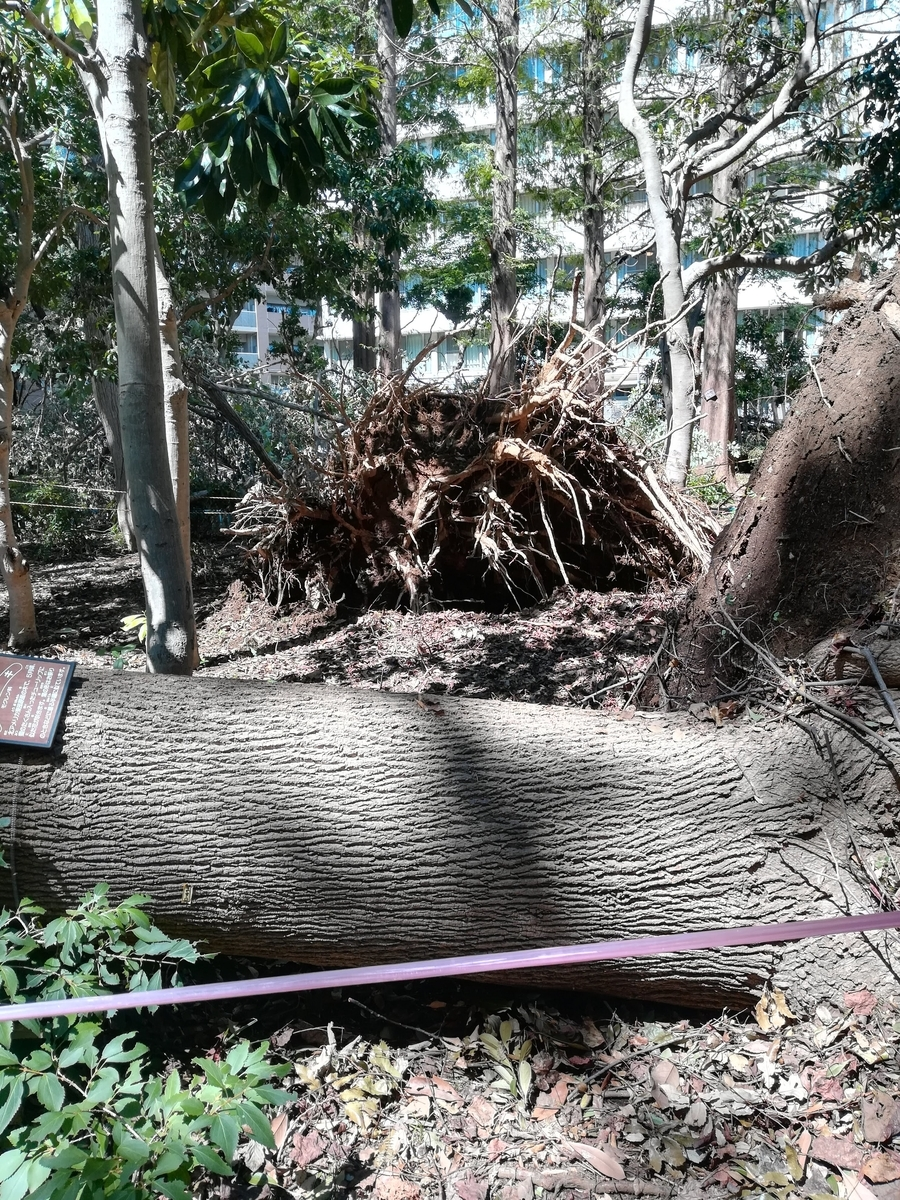 公園内は倒れた木や落ちた枝でいっぱいです。。。