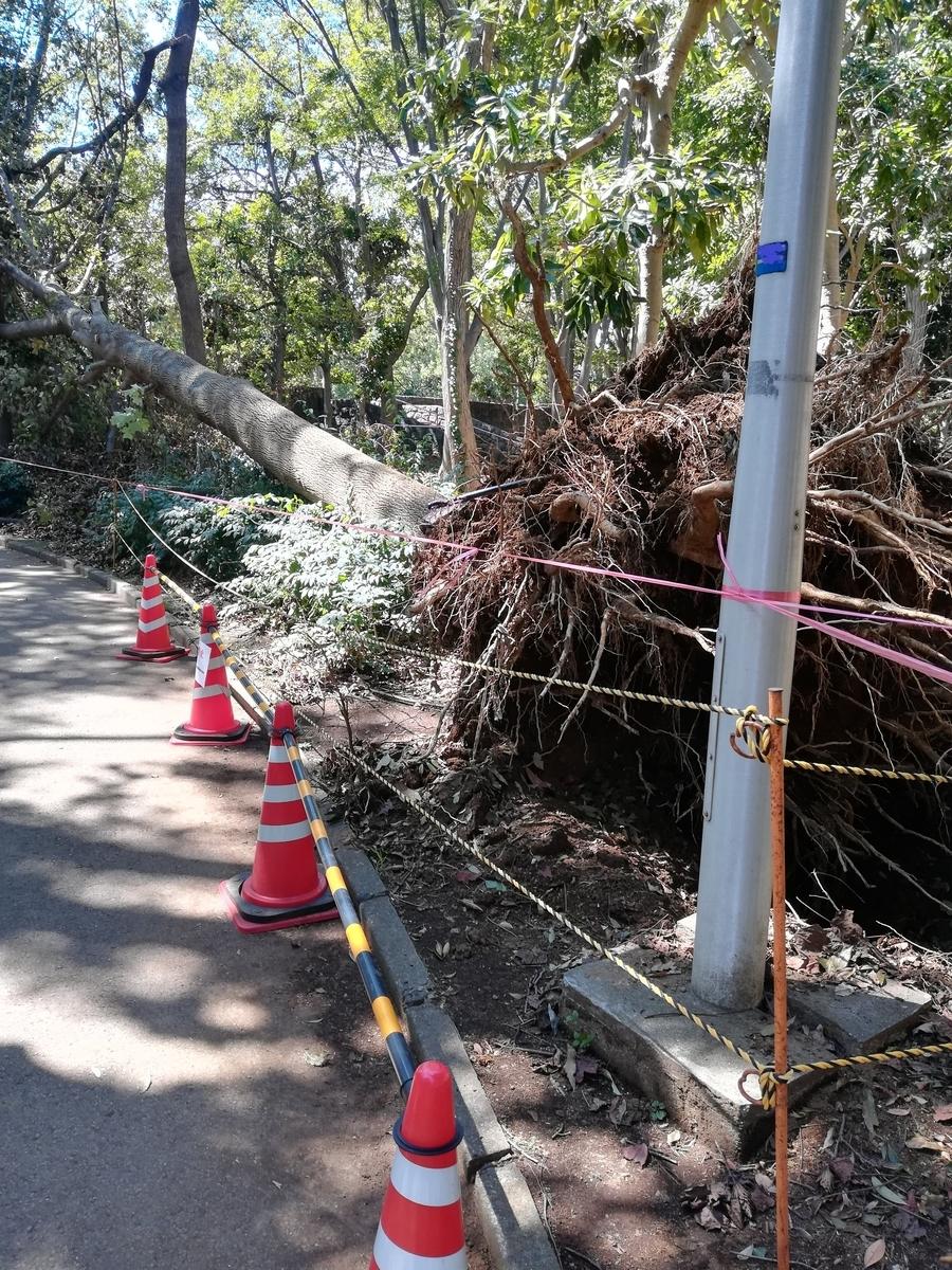 船橋の公園では木が根こそぎ倒れていた。。。