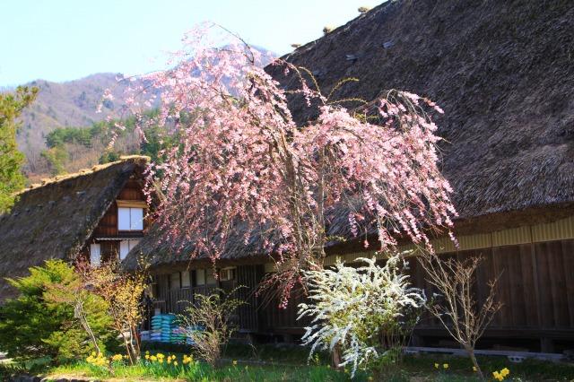 f:id:takayama-sakana:20180423085156j:plain