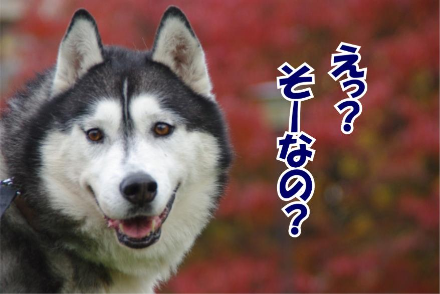 f:id:takayuki2525:20160612215028j:plain
