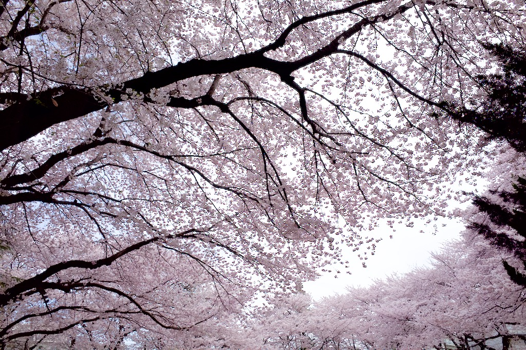 f:id:takayukimiki:20160406164056j:plain
