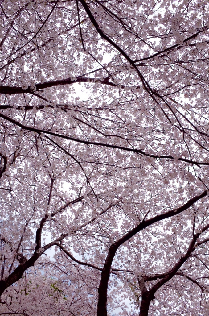 f:id:takayukimiki:20160406164557j:plain