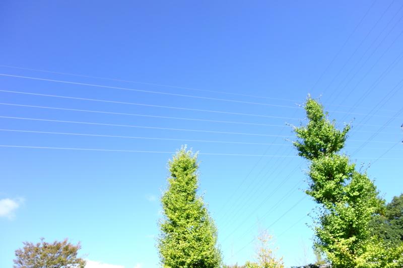 f:id:takayuta818:20161103201237j:plain