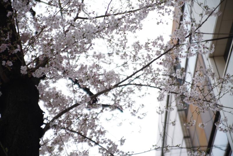 f:id:takayuta818:20170402182141j:plain