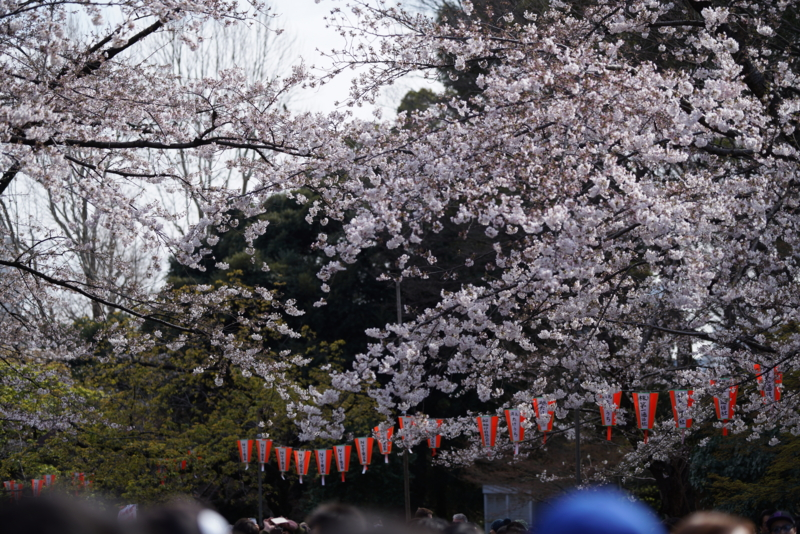 f:id:takayuta818:20170402182156j:plain