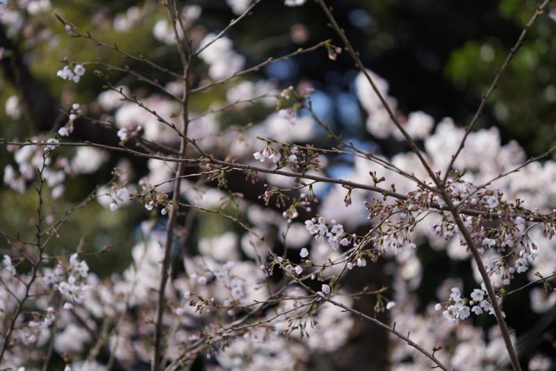 f:id:takayuta818:20170402182209j:plain
