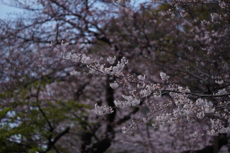 f:id:takayuta818:20170402182221j:plain